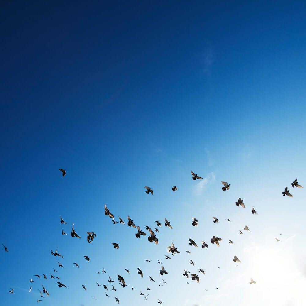 birds flying in the open blue sky